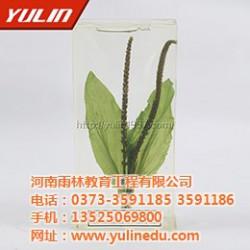 红藻类植物保色浸制标本、标本、雨林教育(