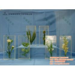 雨林教育(图)、植物种子传播方式标本、标本