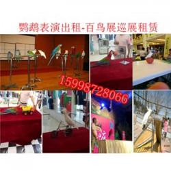 沧州市 动物出租-哪里有出租动物的