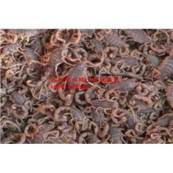 山西蝎子毒的采集蝎子养殖利润