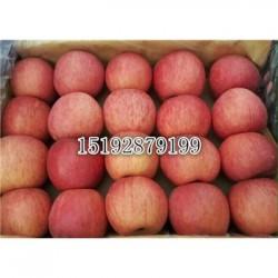 今 日 十月后红富士苹果偏红热 销 价格