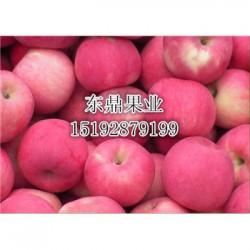 今 日 今年膜袋红富士苹果价格走 势