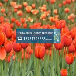 王草种子丨江苏春百宝种业