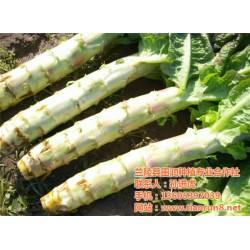 有机蔬菜供应商,有机蔬菜,田润蔬菜批发(查