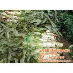 有机蔬菜销售,田润蔬菜批发,有机蔬菜