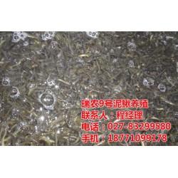 瑞农9号泥鳅处理方案_武汉瑞和园生态农业有