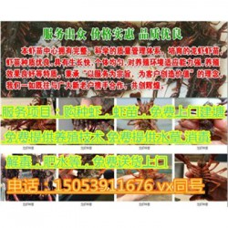 奉贤龙虾苗多少钱一斤—龙虾繁育基地