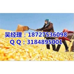 个人收购玉米大豆、民发养殖、玉米大豆
