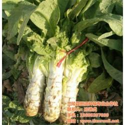 有机蔬菜|有机蔬菜哪家好|田润蔬菜批发(优