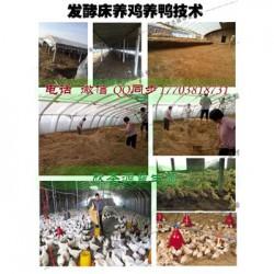 发酵床技术养牛到底行不行 一盒菌种多少钱