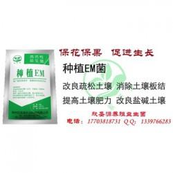 治理土壤板结 江苏徐州草莓园土壤板结怎么