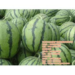 水果批发配送公司_山农农副产品配送_水果批