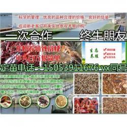 乳山小龙虾指导价格—龙虾种苗报价