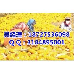 收购玉米的老板、收购玉米、民发养殖(查看)
