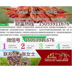 汾西县小龙虾指导价格—龙虾种苗报价