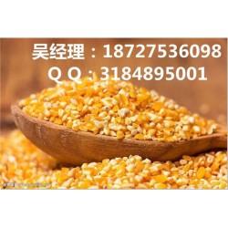 民发养殖(图)_高价收购玉米_收购玉米