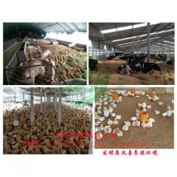 发酵床养鸡菌种什么价格怎么购买