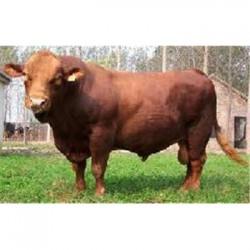 巴中市肉牛厂区规划图
