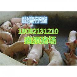 黄南二元母猪厂家价格