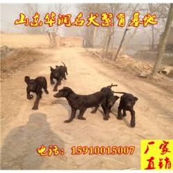 湖北襄樊有黑狼犬出售吗