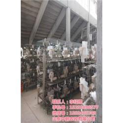 商品鸽出售、山西商品鸽、山东中鹏农牧