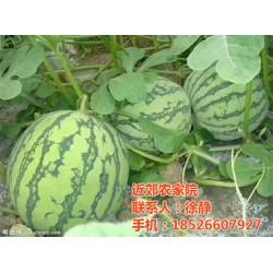 近郊农家院(图)_津南农家院出售_农家院