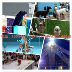 海狮表演活动九江市房地产动物租赁公司