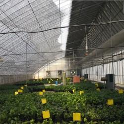 日光温室安装设计、冬暖式大棚建设厂家蔬菜大棚